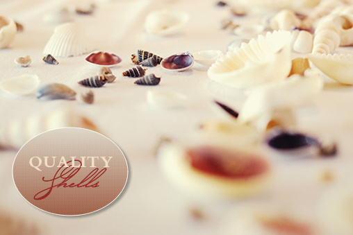 Shells For Your Wedding