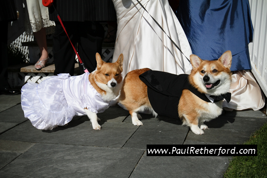 Mackinac Island Wedding with dogs