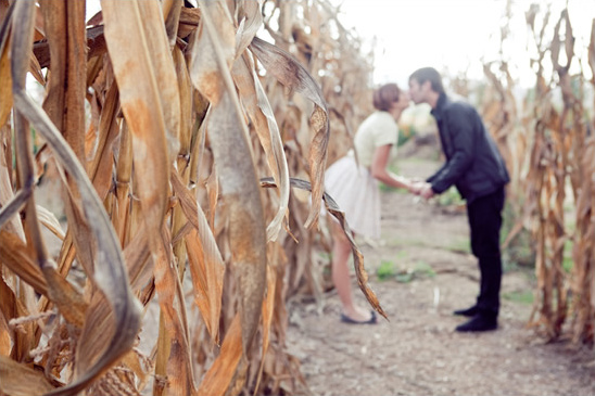 Cornfield Engagement Shoot By Shannon Lee Images