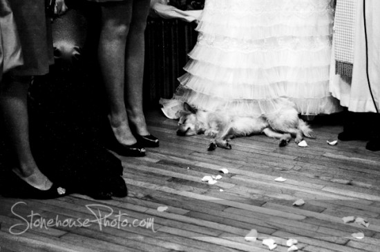 A beatiful winter wedding with a very tired best - dog.