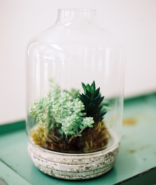 succulent in a jar