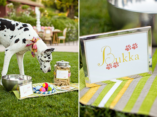dog treats at wedding