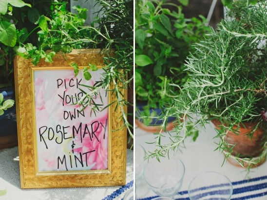 pick your own herbs