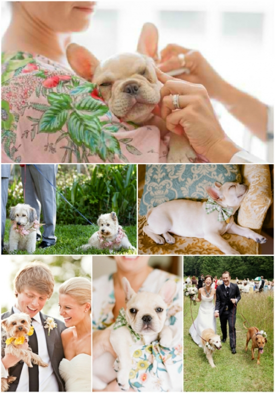 dogs weddings and plum pretty sugar loungerie robes
