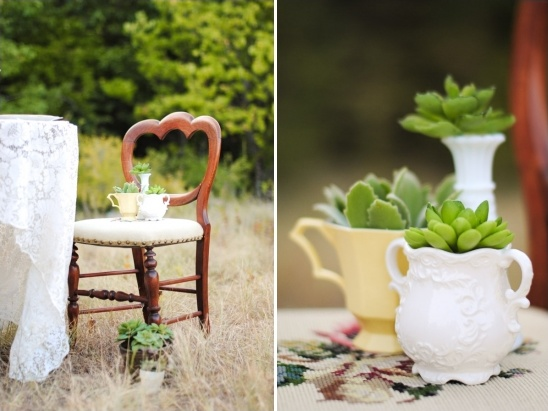succulents planted in heirloom china