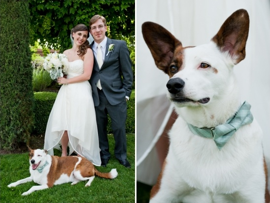 dog in bow tie for wedding