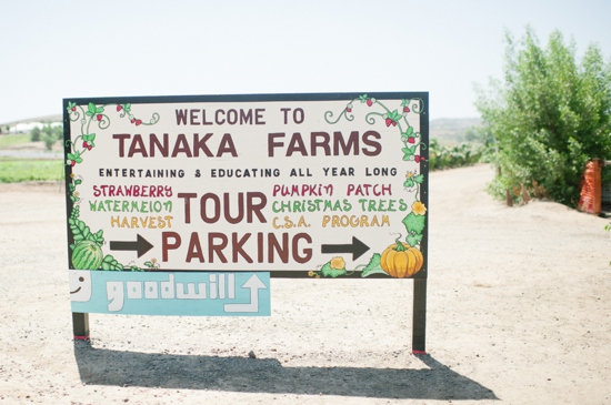 Tanaka Watermelon Farms Anniversary Shoot