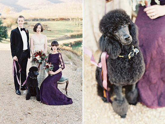 wedding poodle