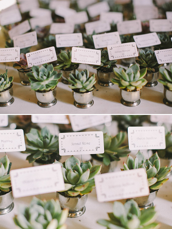 succulent wedding favors that double as place cards