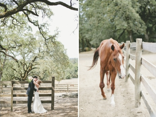 horses on wedding venue grounds