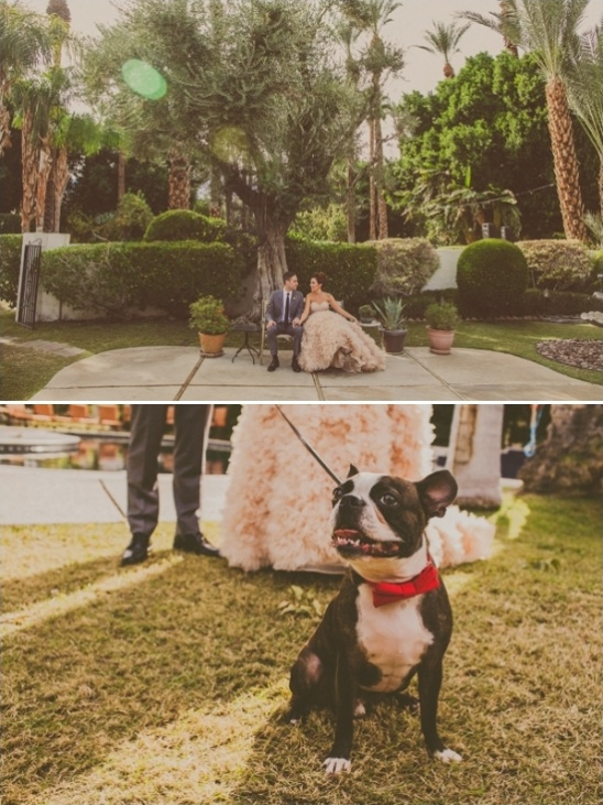 wedding attire for your pets