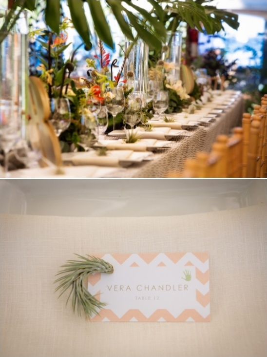 air plants on escort cards