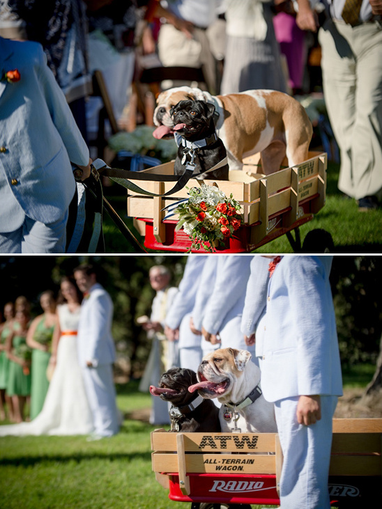 precious dogs as ring bearer and flower girl