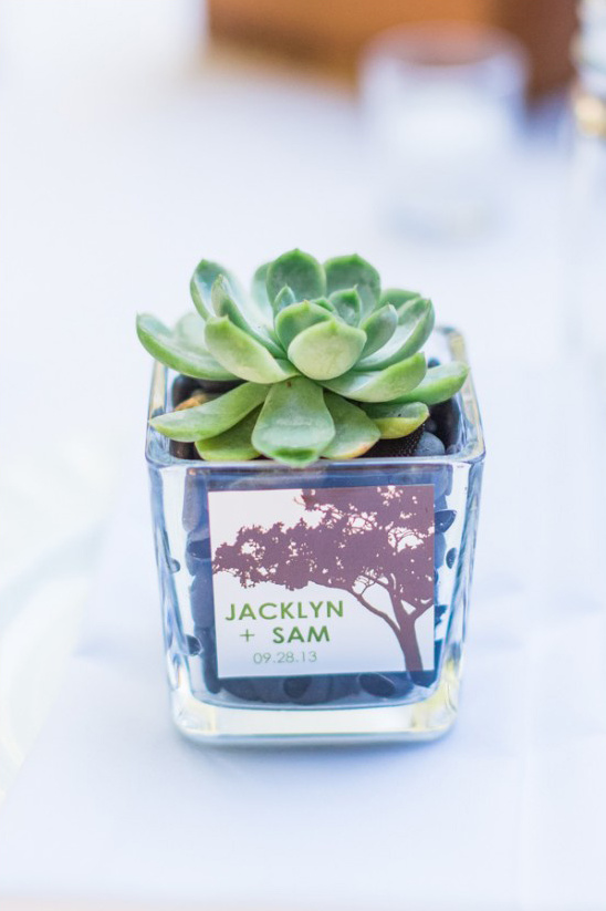 succulents for wedding favors