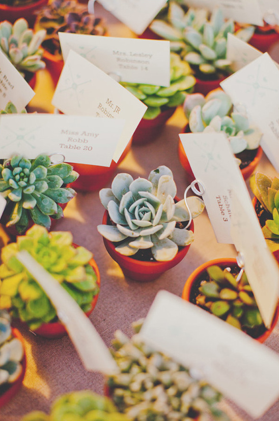 potted succulent escort cards and favors