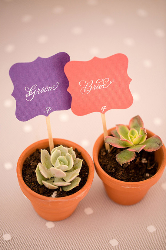 groom and bride succulents