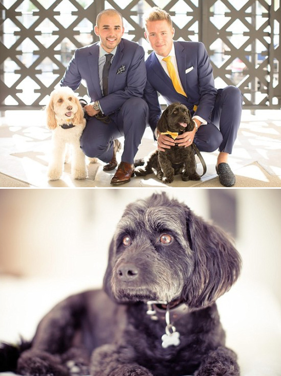 the grooms and their pups