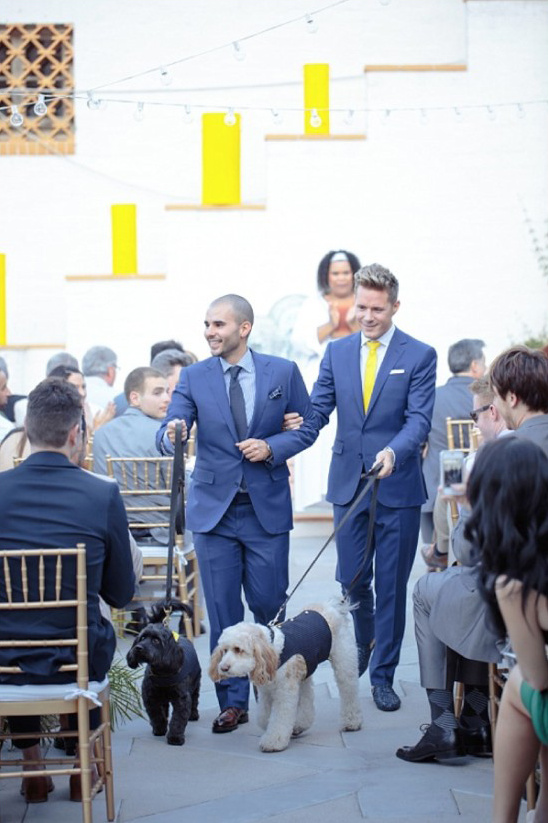 dressed up dogs go up the aisle