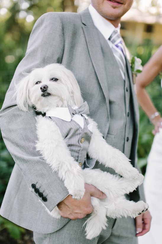 white dog in a puppy tux