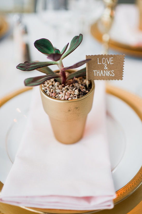 love and thanks succulent favors
