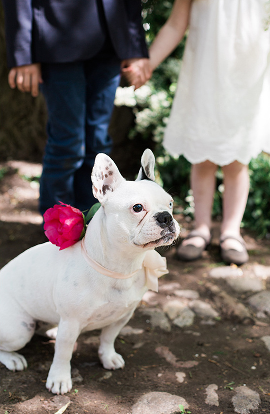 cute doggie with hot pink floral accessory
