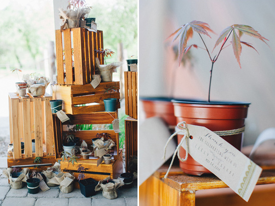 japanese maple tree sprout wedding favors