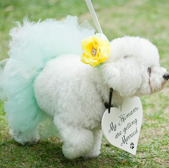 my humans are getting married today sign