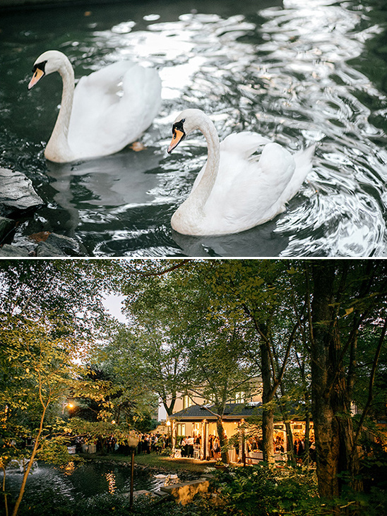 wedding swans