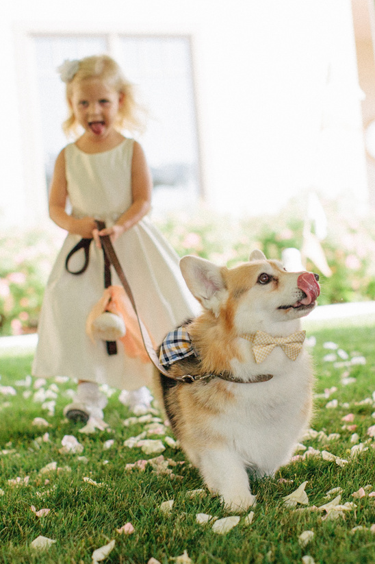 flower girl and ring bearer corgi