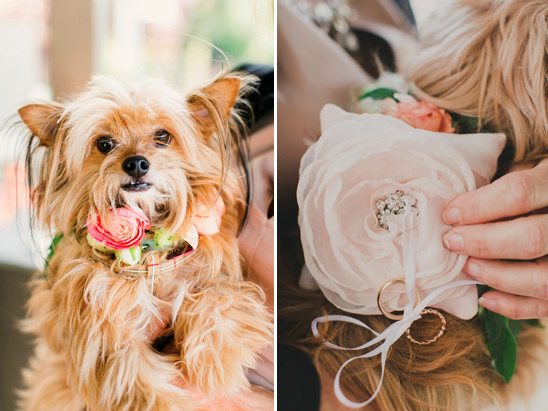 puppy ring bearer collar @weddingchicks