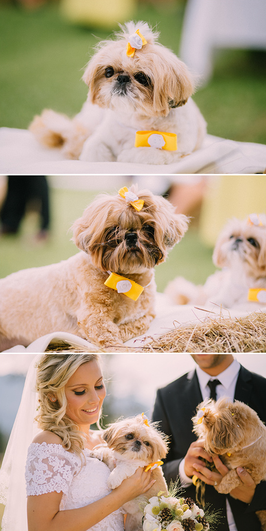 wedding puppies @weddingchicks