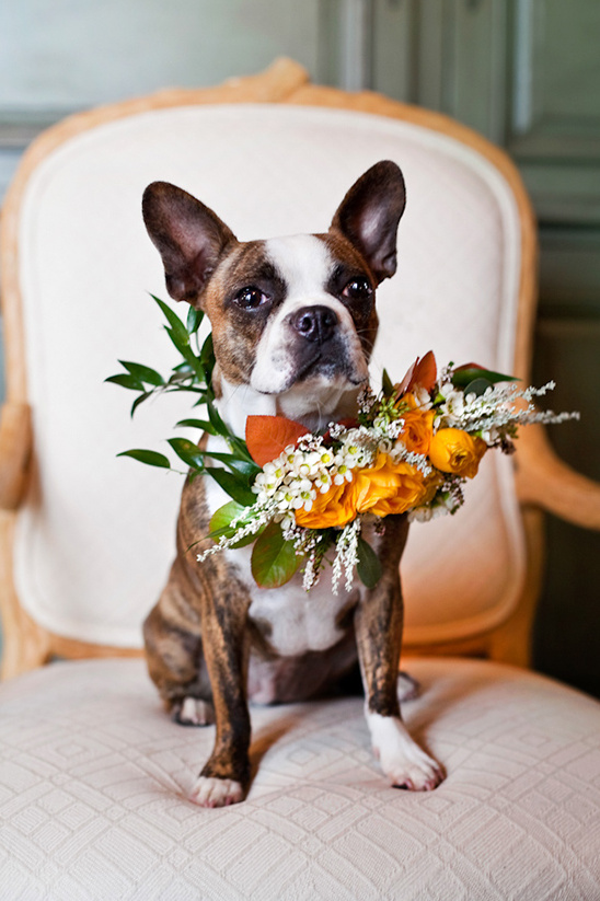 Cute doggie ring bearer @weddingchicks