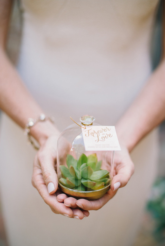 succulent wedding favor @weddingchicks