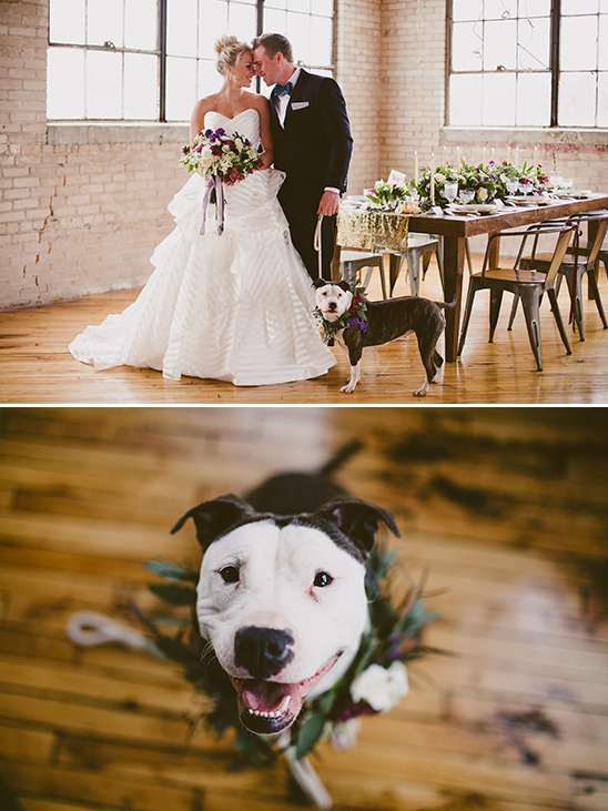 cute dog with floral collar @weddingchicks