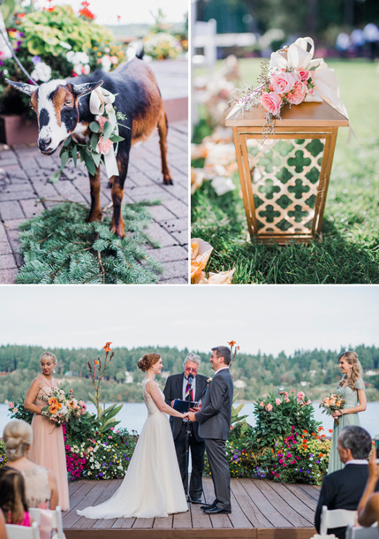 wedding goat and outdoor ceremony