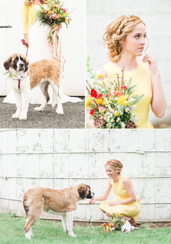 beautiful wedding dog