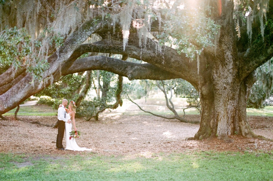 romantic old trees with Spanish moss