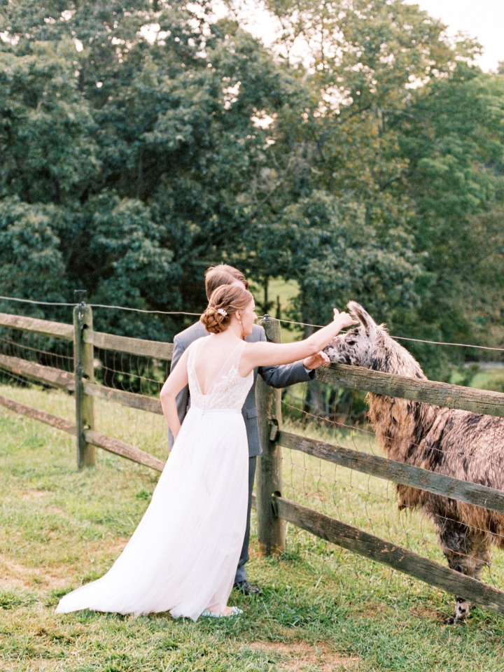 bride and groom saying hi to the llama