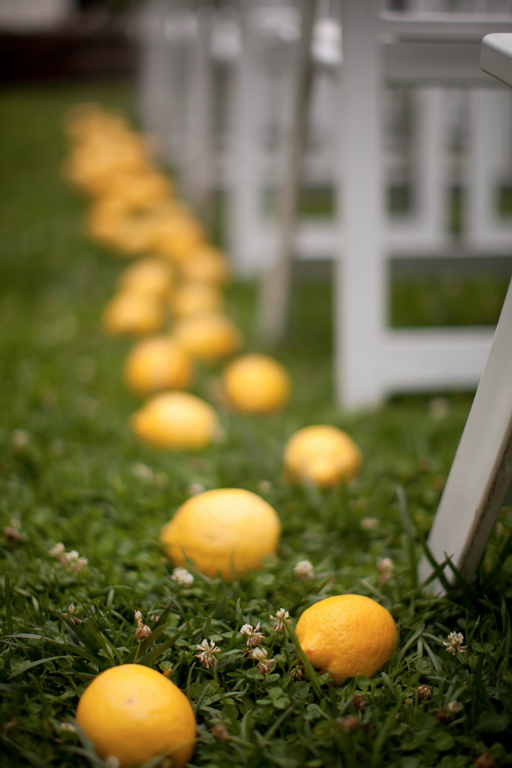lemony fresh ceremony decor