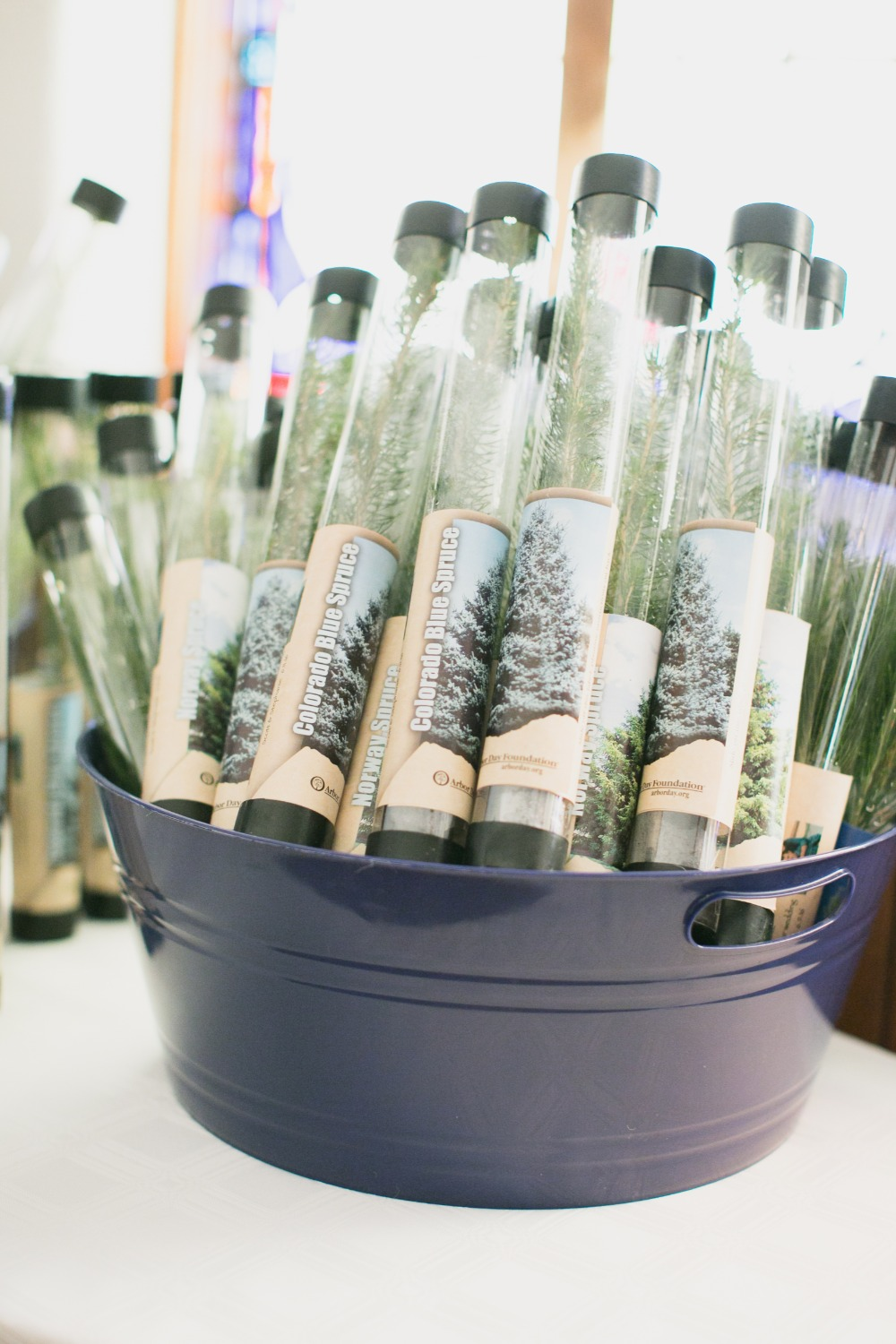 plant a tree wedding favor