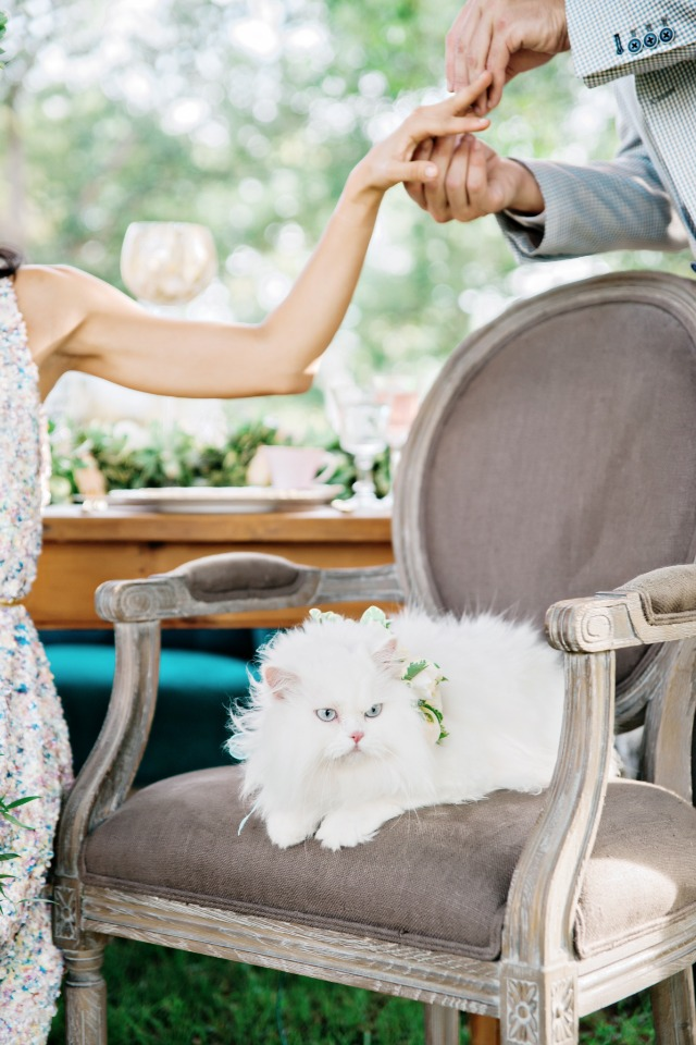 soft white wedding cat