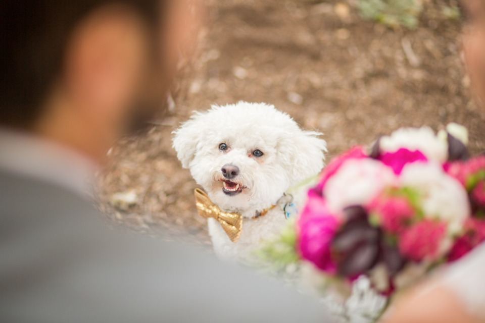wedding dog so happy for his humans