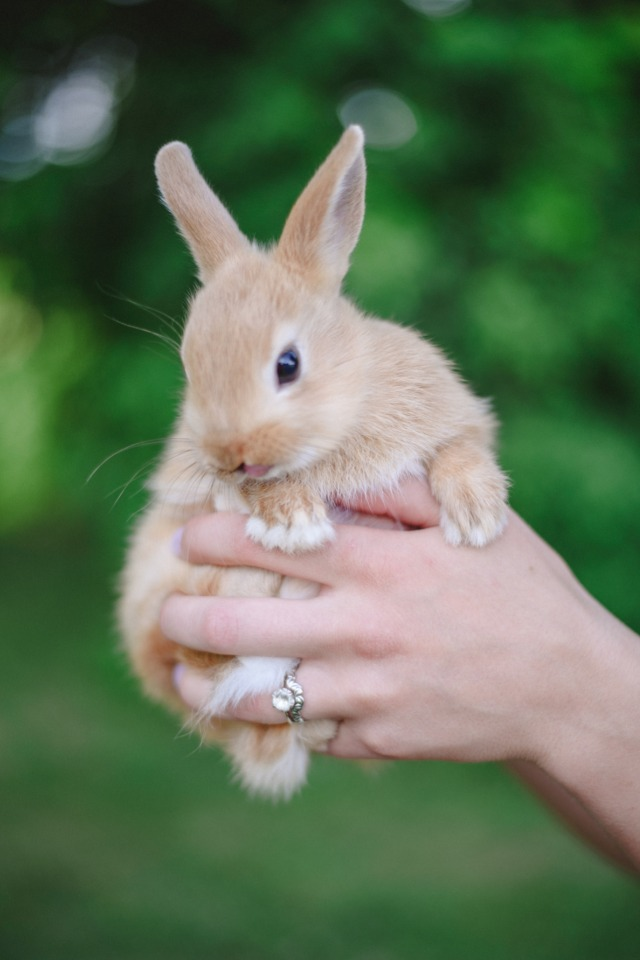 bunnies for your wedding