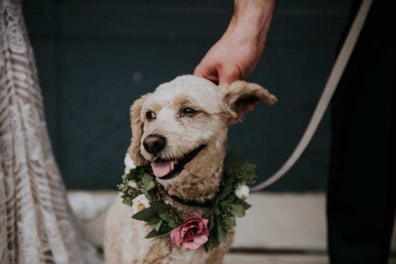 doggies at weddings with adorable floral crowns ..... YES PLEASE!!