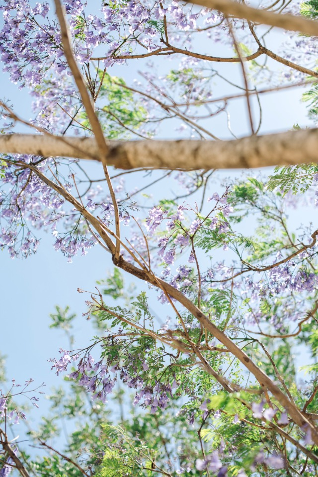 flowering trees blooming over your wedding ceremony