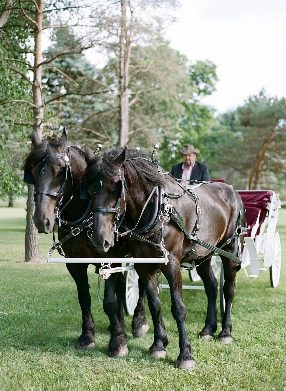 Wedding carriage transportation