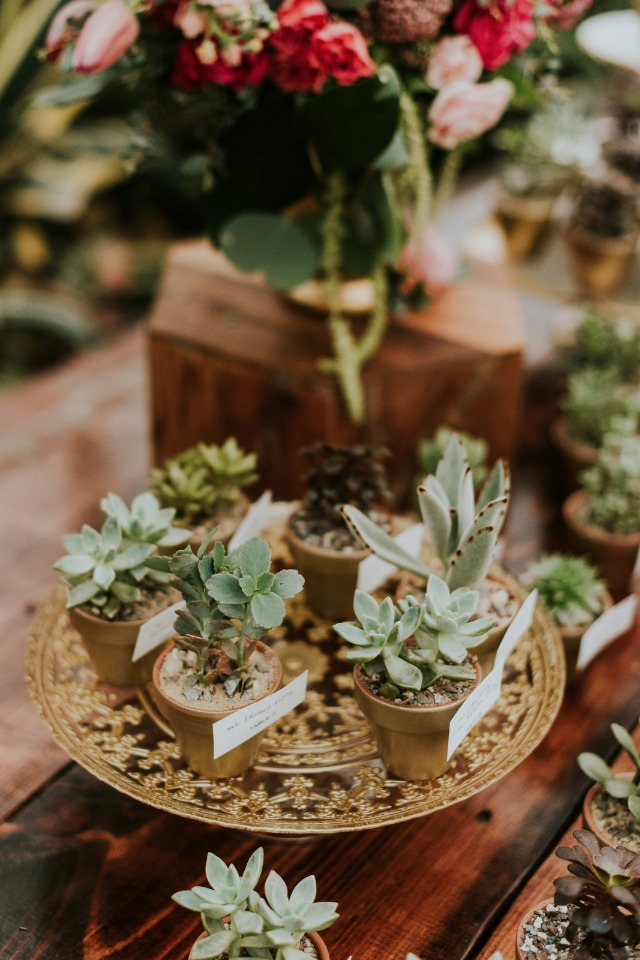 cute mini potted succulent escort cards