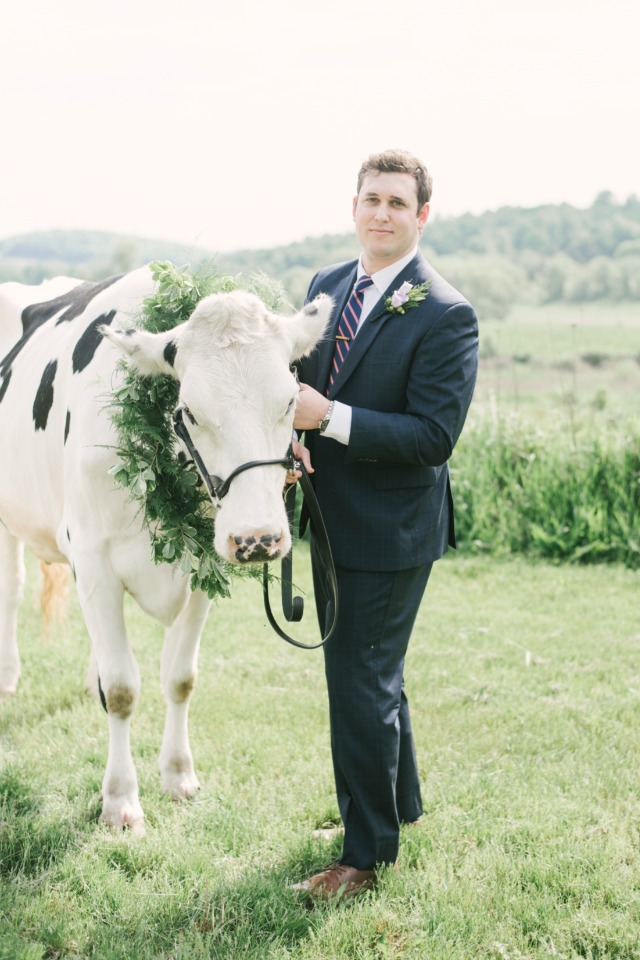 wedding cow