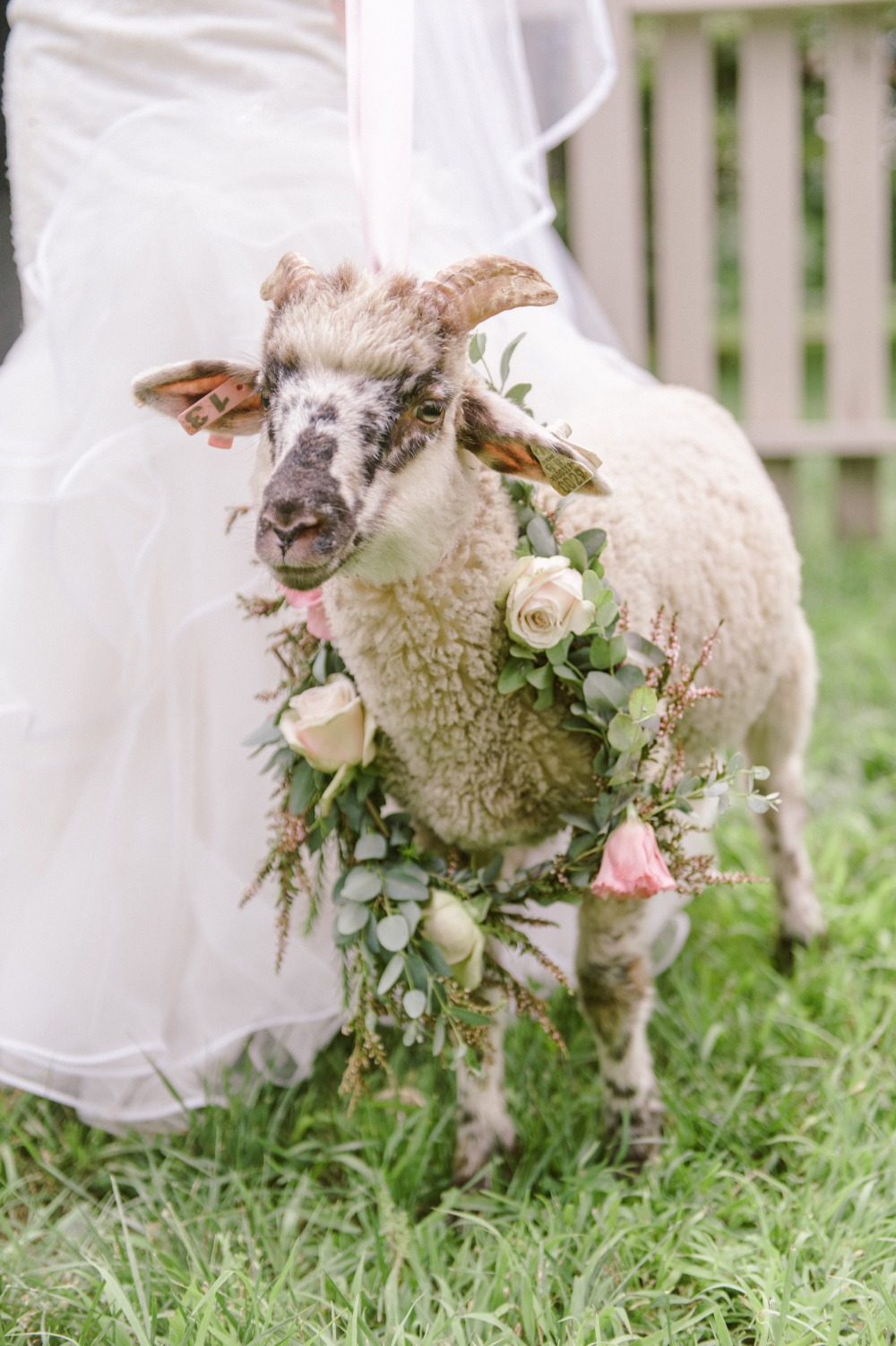 wedding ram with rose and eucalyptus wreath
