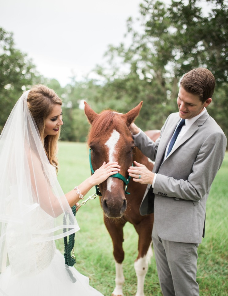 wedding horse stealing the show